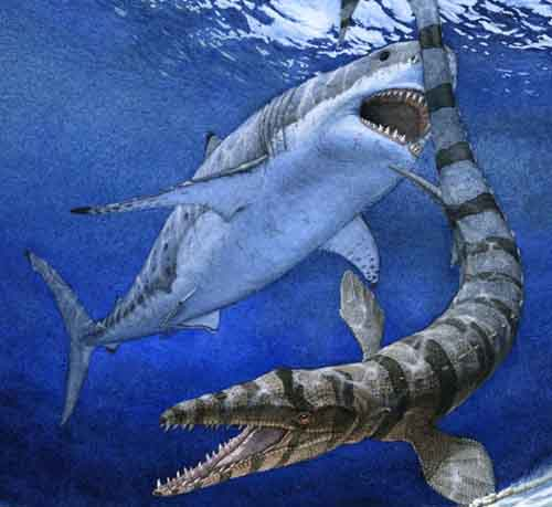 Painting of Cretoxyrhina attacking a mosasaur by Julius T. Csotonyi (csotonyi.com)