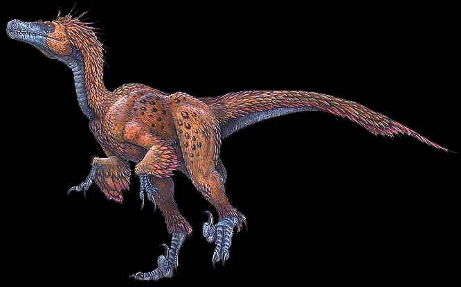 http://www.arizonaskiesmeteorites.com/Dinosaur_Fossils_For_Sale/deinonychus_antirrhopus.jpg