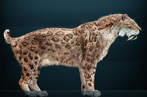 1000  images about Smilodon on Pinterest   Extinct, Timeline and Roxy