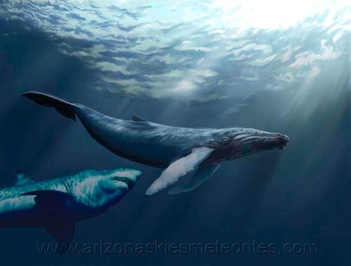 Megalodon attacking whale
