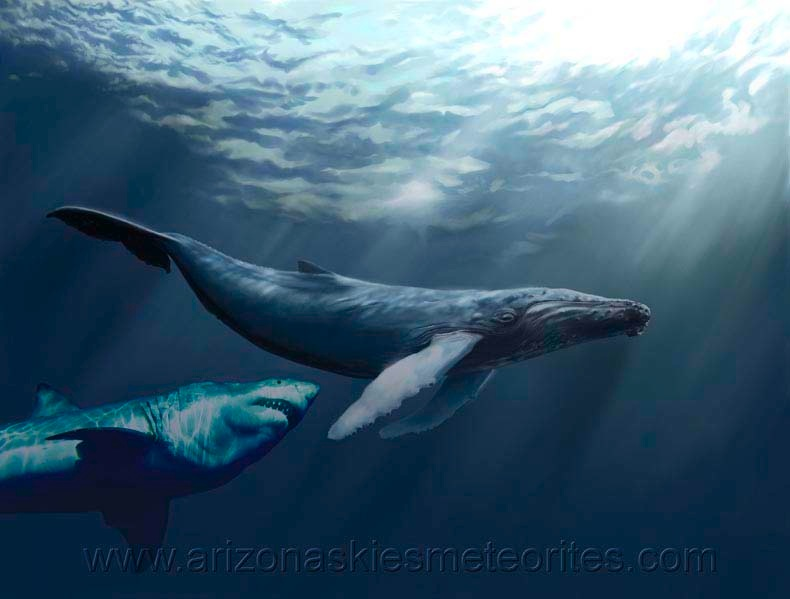 Megalodon shark attacking whale